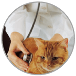 Pet Medical Assesment