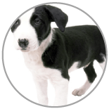 Puppy And Kitten Wellness at Westway Animal Clinic