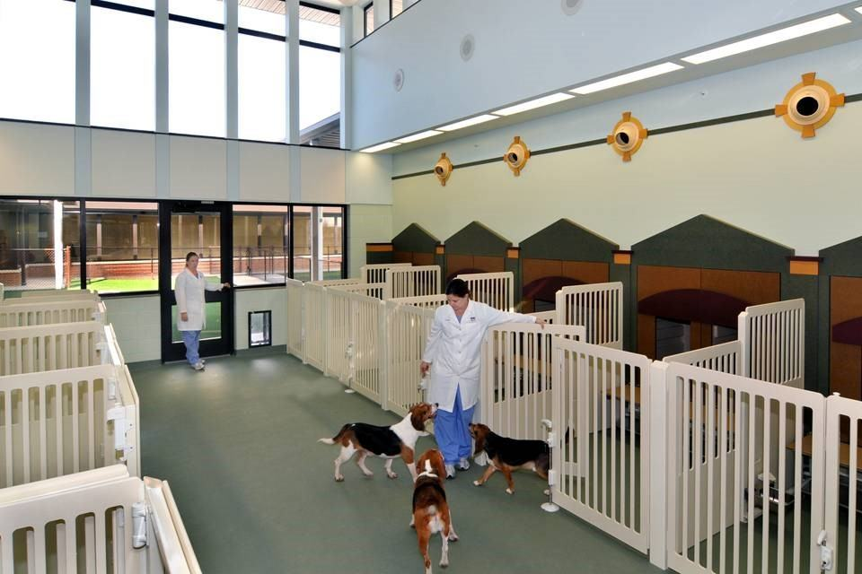 "This area is known as ""Main Street"" in the dog facility. Each dog has a private home and shares a porch with a friend! They gain access through their microchips!"