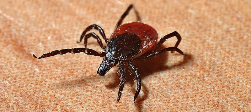 May 2017 Blog - The Ticks Have Arrived